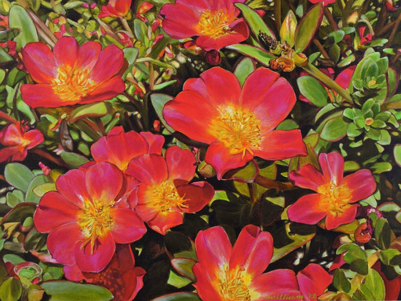 Portulaca Happy Hour